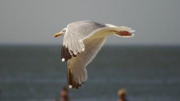 mal die Flügel hängen lassen